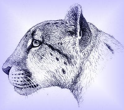 Советник Gepard на Форекс. Скачать Гепард 7 бесплатно