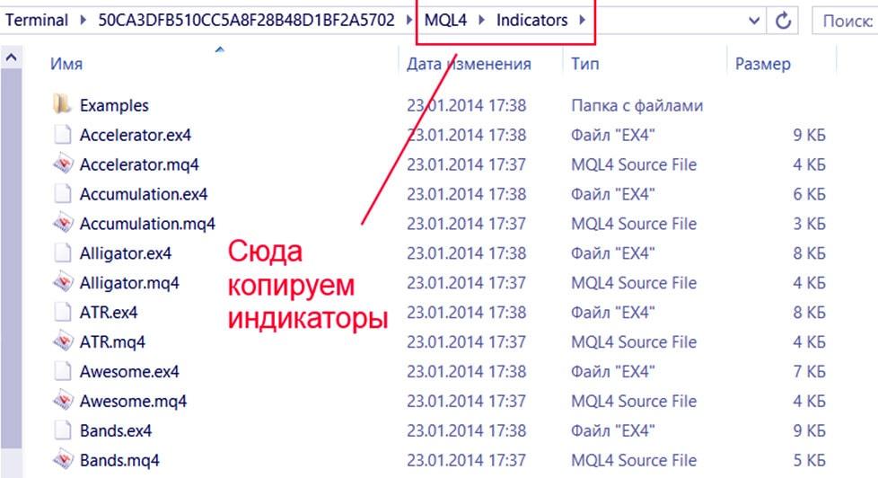 файлы в папку МТ4